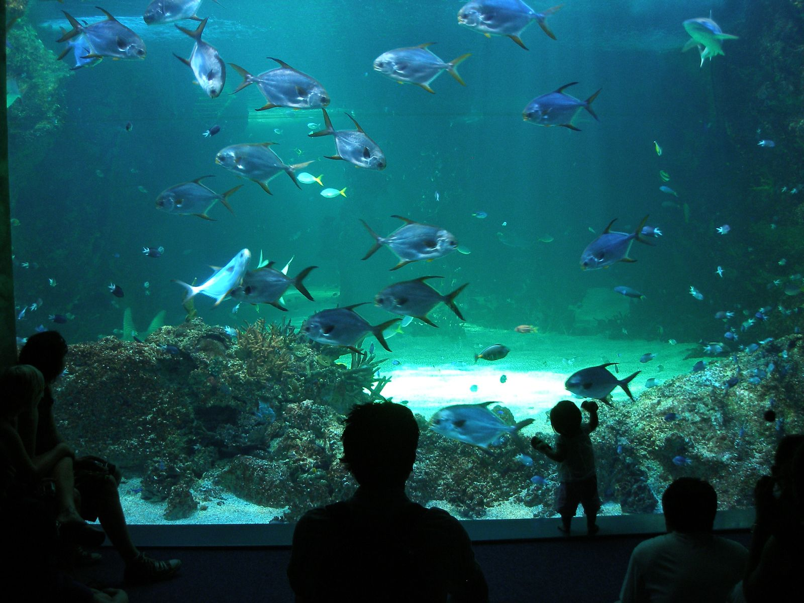 Sea Life Sydney Aquarium, Sydney