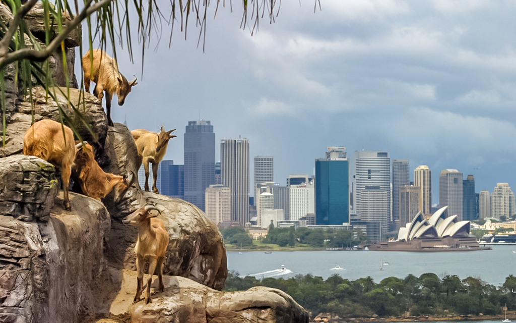 Taronga Zoo in Sydney