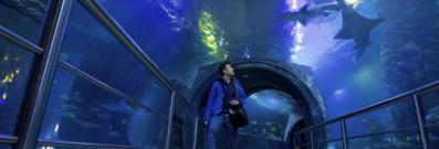 SEA LIFE Melbourne Aquarium, Melbourne
