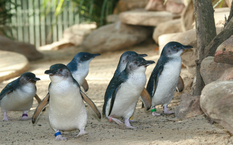 Featherdale Wildlife Park, Sydney