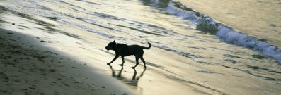 dog-friendly-beaches-in-sydney