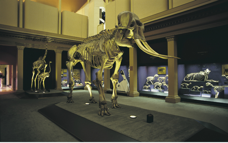 The Australian Museum, Sydney. Image Credit - Grenville Turner; Destination NSW.