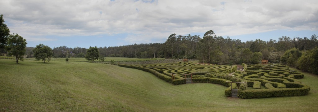 bago vineyards maze port macquarie nsw