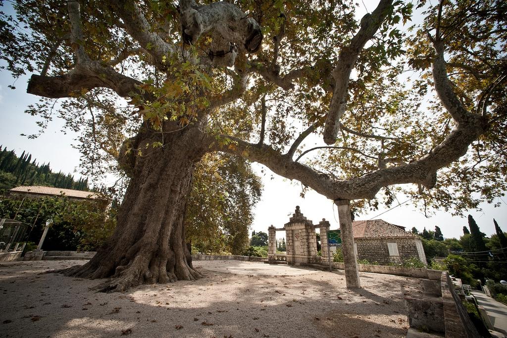 Trsteno Arboretum in Croatia game of thrones