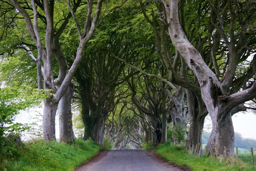 Dark Hedges in County Antrim, Northern Ireland. Source: Cleta Ernst.