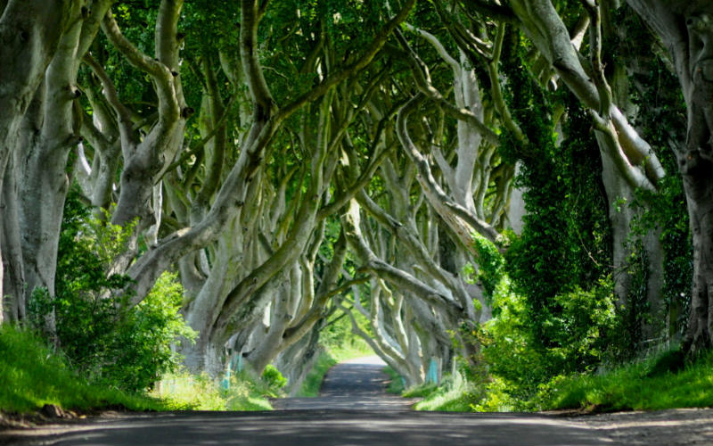 The Dark Hedges, Stanocum, Northern Ireland