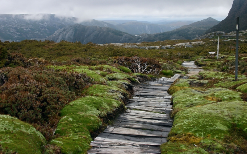 Cradle Mountain Boardwalk in Cradle Mountain-Lake St. Clair National Park, Tasmania