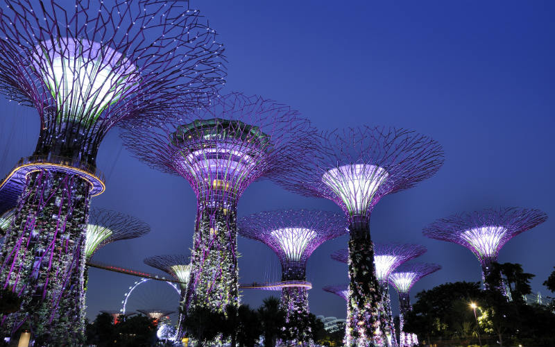 The Super Tree Grove at the Gardens of the Bay, Singapore.