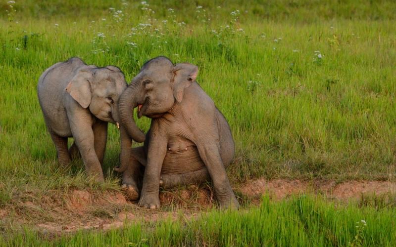 elephants in khao yai national park thailand