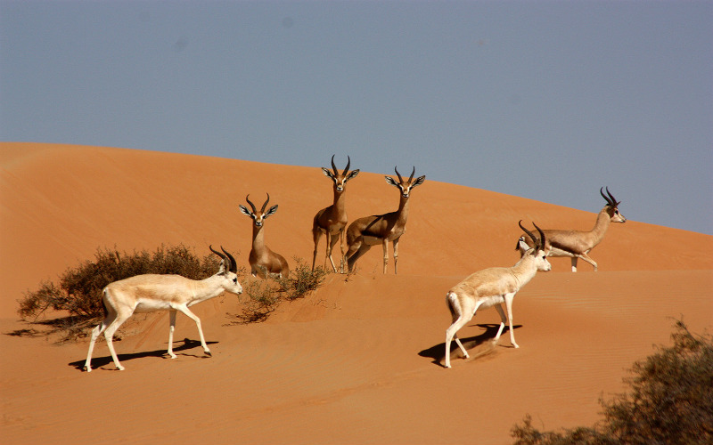 Conservation Reserve, Dubai, United Arab Emirates