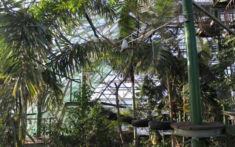 Cairns Zoom and Wildlife Dome, Queensland, Australia