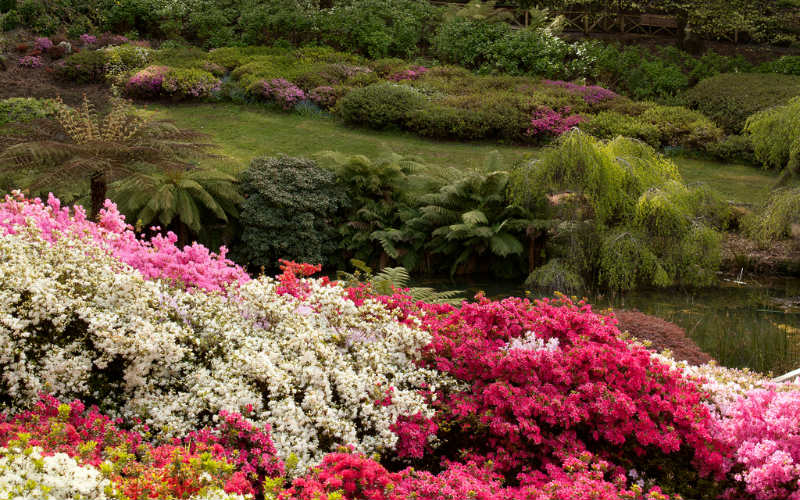 National Rhododendron Gardens, Victoria