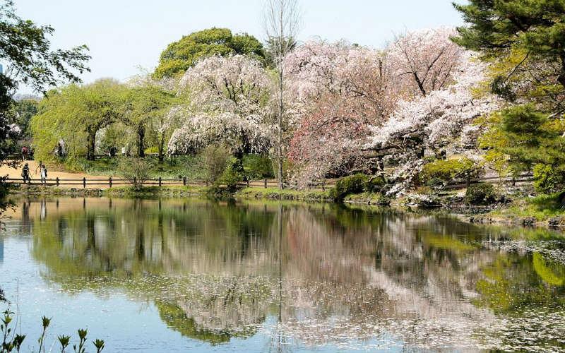 Shinshuku Gyoen National Garden, Tokyo, Japan