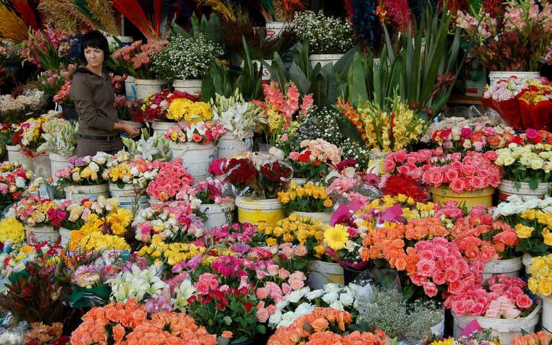 Adderley Street Flower Market, Cape Town