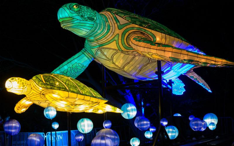 Lights for the Wild, Taronga Zoo, 2015