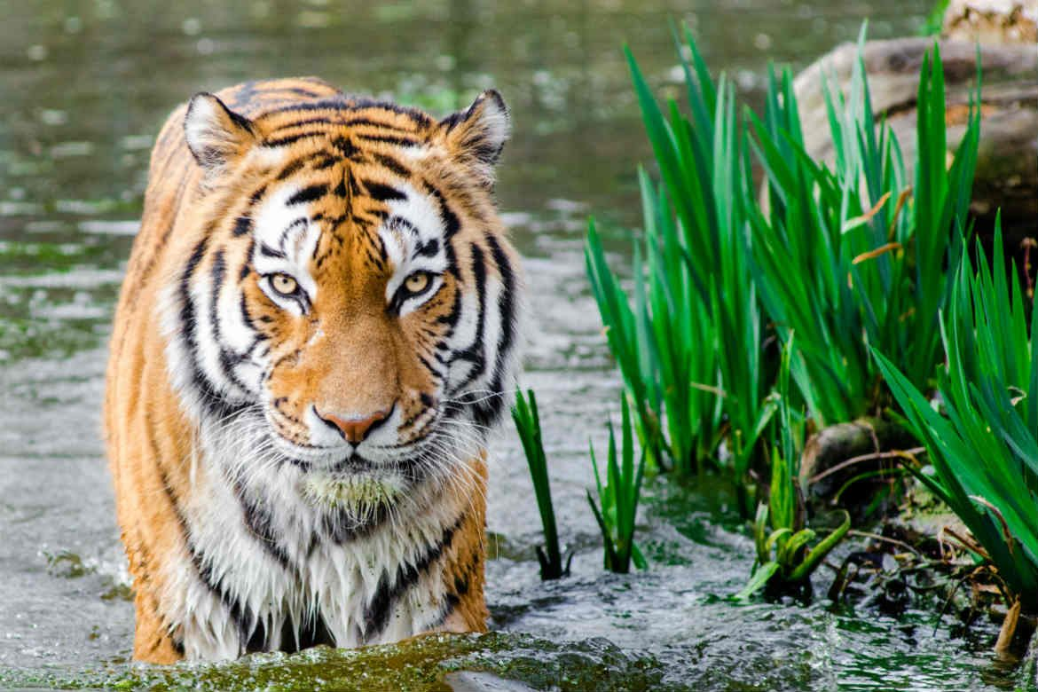 10 Best Zoos in the World