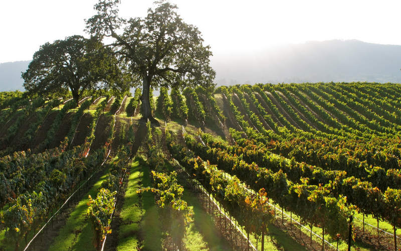 The Sonoma County wine region, USA