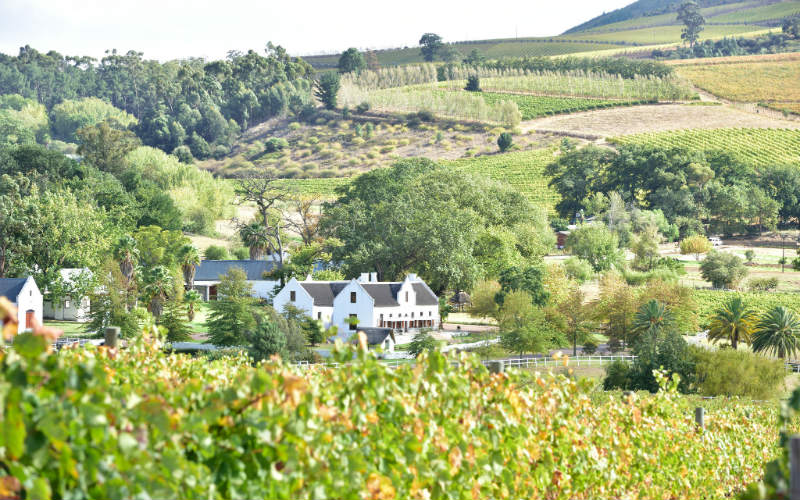 The Stellenbosch wine region, South Africa
