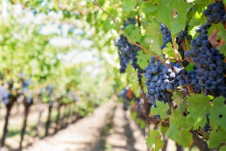 The World's Best Wine Regions
