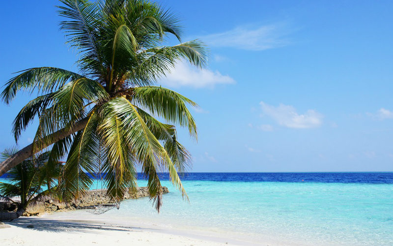 Maldives beach ocean palm tree