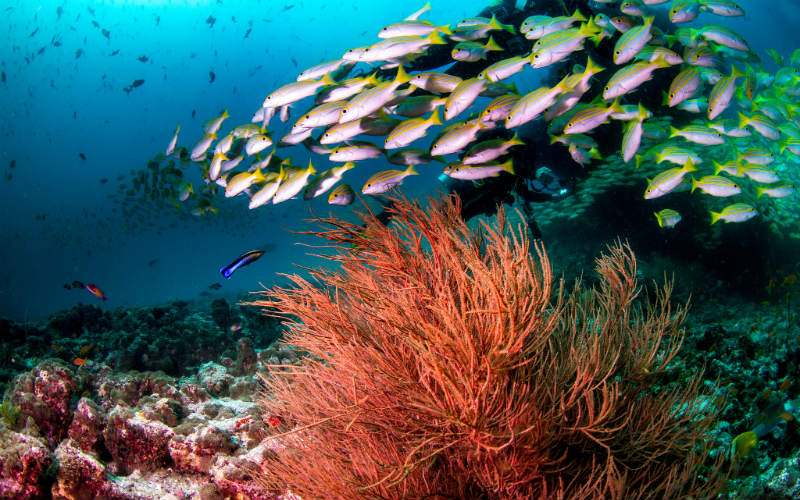 Maldives tropical fish ocean coral