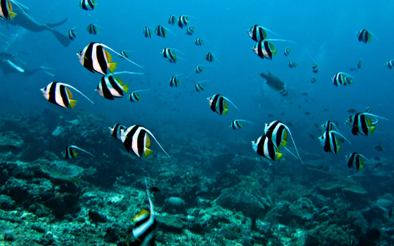 Marine life in Bali, Indonesia