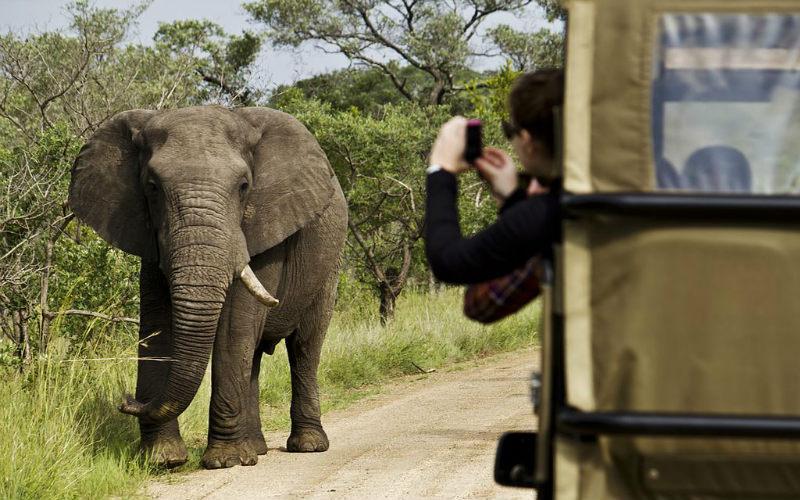 Elephant on safari tour, South Africa