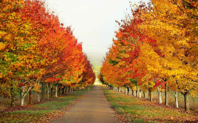 The Best Places To Experience Autumn In Australia | Webjet