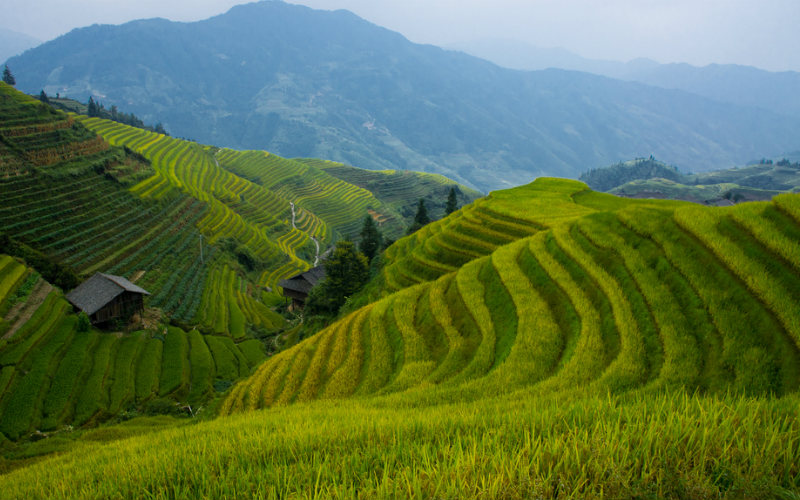 Longsheng Rice Terraces, Longsheng, China