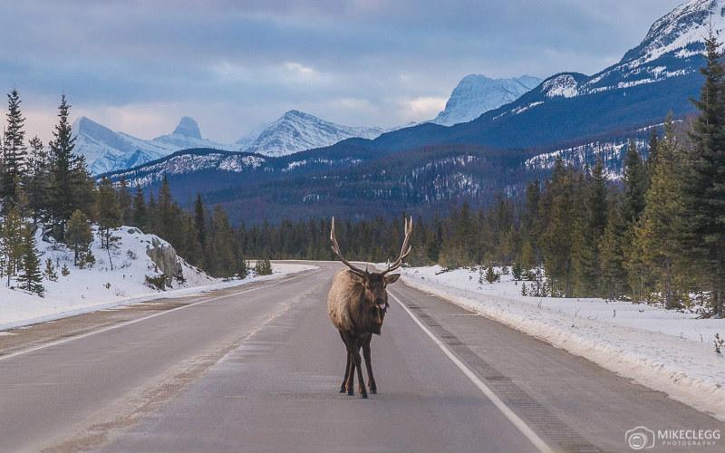 Canadian Rockies, Alberta, Canada