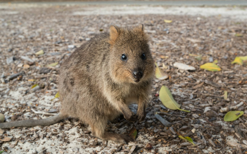 10个标志性的澳大利亚旅游景点
