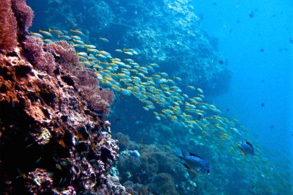 Koh Phi Phi Island, Thailand fish coral