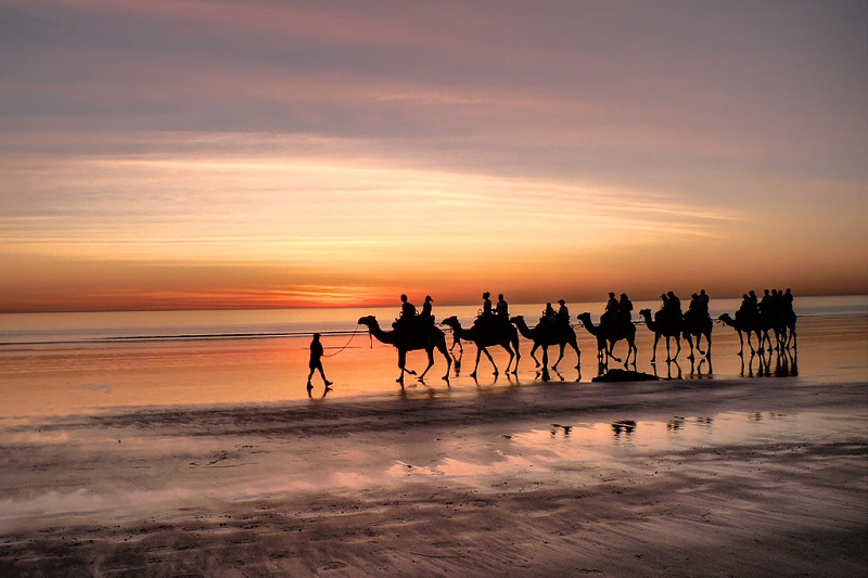 Camels walking Cable Beach in Broome, Western Australia