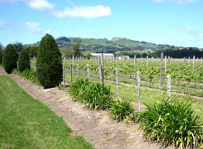 Hawkes-Bay-Vineyard-North-Island-New-Zealand