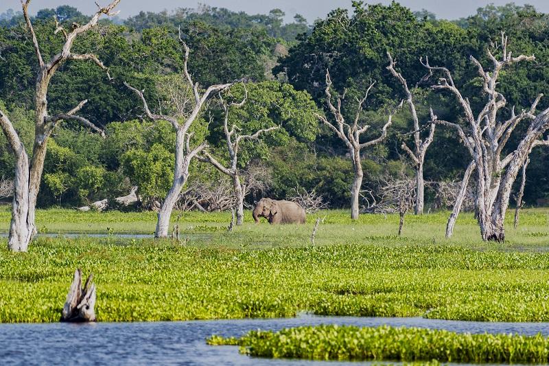 Webjet Exclusives Experiences Wildlife Sri Lanka