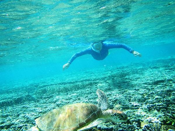 Snorkelling-Lady-Elliot-Island-Queensland-Great-Barrier-Reef