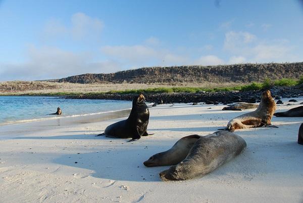 Seals-Beach-Galapagos-Islands-Snorkelling