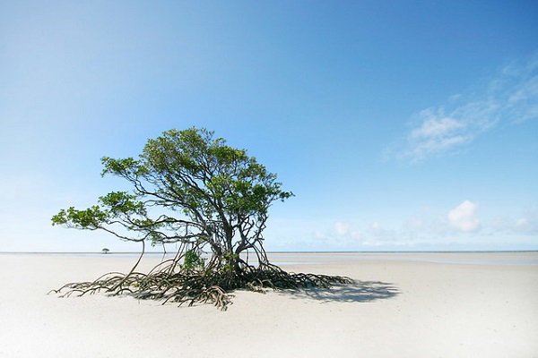 Deserted-Beach-Bloomfield-Track-Queensland-Cape-Tribulation