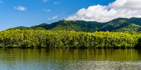Daintree-Rainforest-River-View-Port-Douglas-Activities