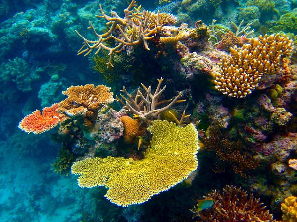 Great-Barrier-Reef-Port-Douglas-Things-To-Do