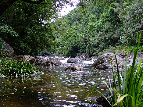 Mossman-Gorge-Things-To-Do-Port-Douglas