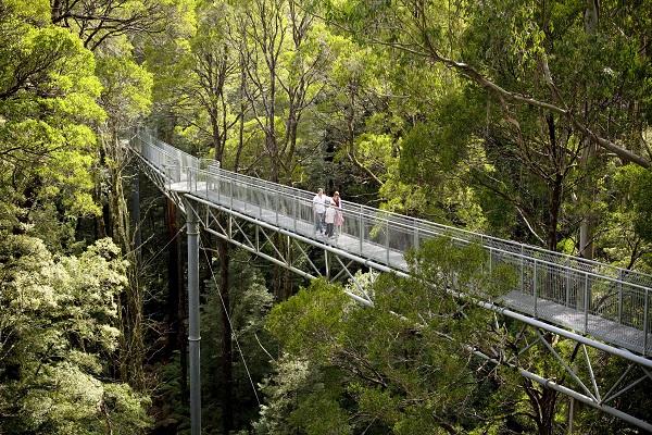 Otway-Fly-Treetop-Walk-Great-Ocean-Road