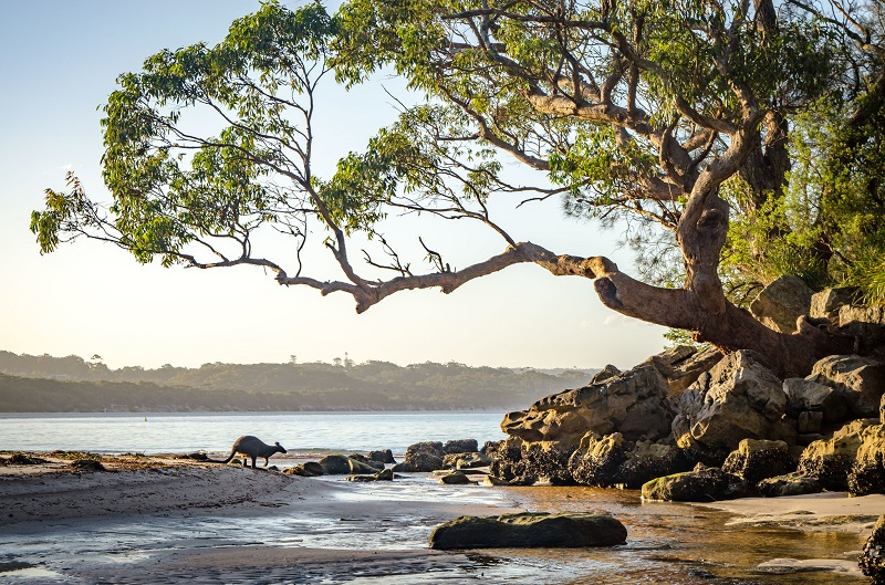 Jervis-Bay-Beach-Shoalhaven-NSW