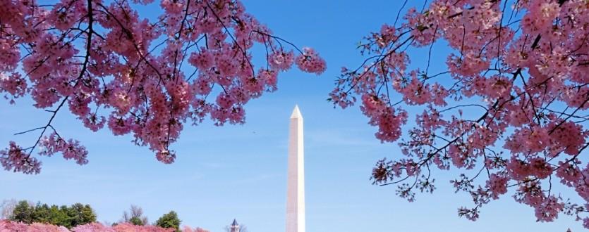 Head to Washington DC for the National Cherry Blossom Festival.