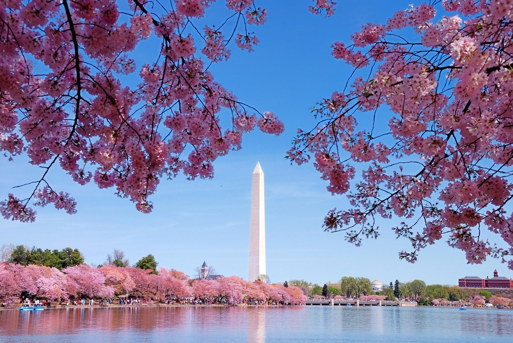 map of crystal city va with Cherry Blossom Celebrations Around The World on File Delhi metro rail  work moreover 5062760846 likewise Nusa Penida Indonesia in addition Viewtopic as well 489907265691197156.