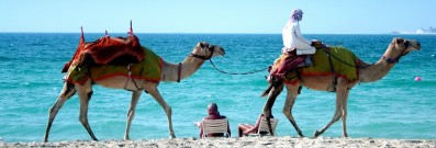 Take a ride on a camel in Dubai.