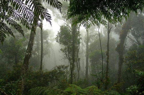 The Borneo Rainforest in Malaysia offers more than just exotic animals and tropical rain. Travel here for a festival of world music.