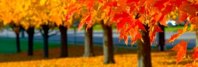 Where are the best places to see autumn leaves? Here are four tops spots.